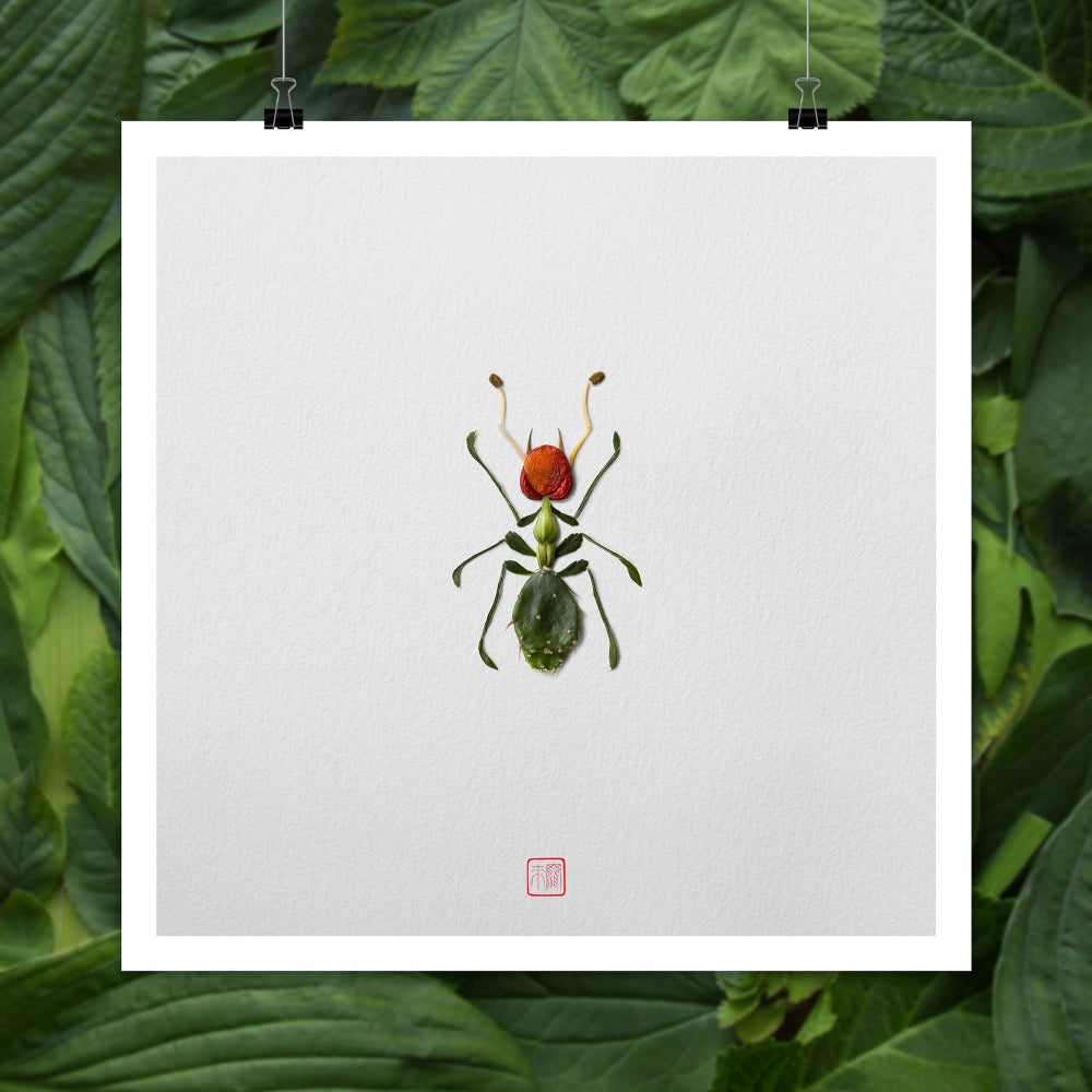 Image of Natura Insects Series 5 -Desert Creatures-