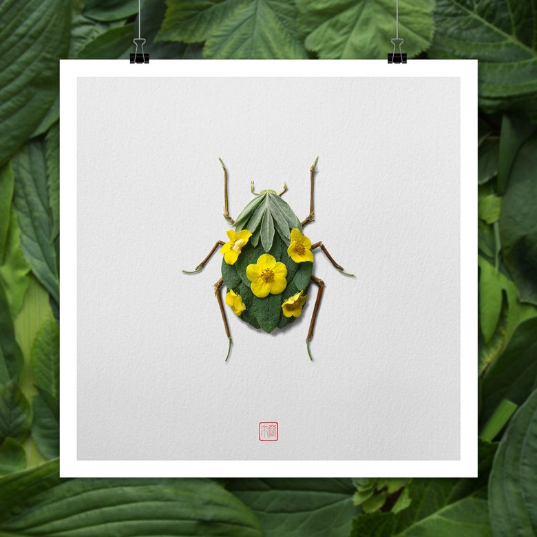 Image of Natura Insects 5 -Jewel Beetles-