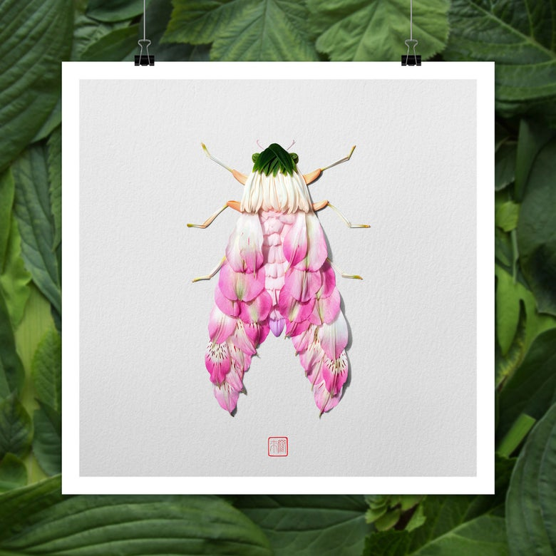 Image of Natura Insects Series 7 -Spring 2019-