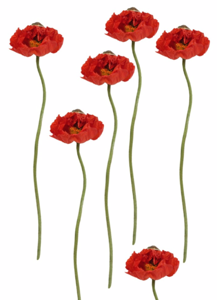 Image of POPPIES FOREVER