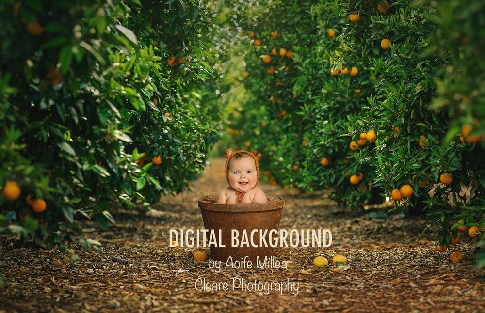 Image of sitter or newborn layered digital backdrop , the orange grove