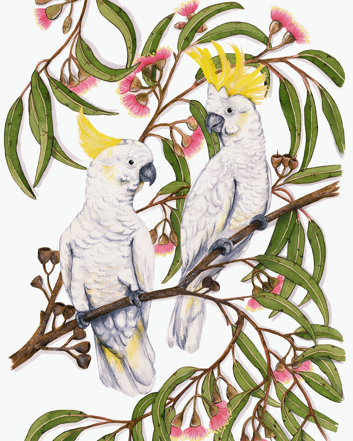 Image of Two Cockatoos