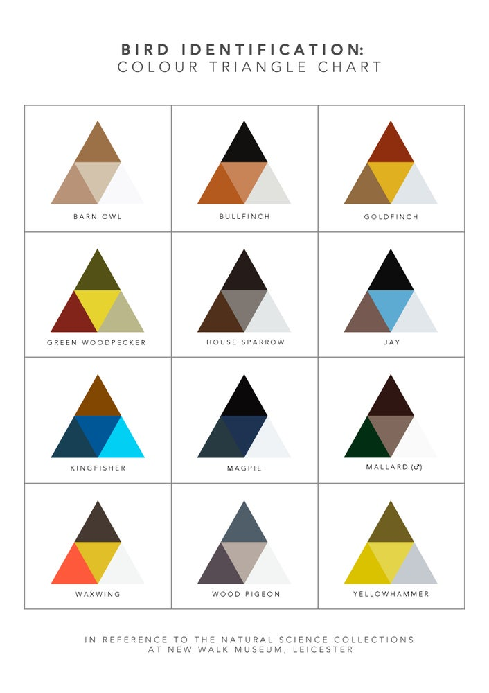 Image of Bird Identification: Colour Triangle Chart
