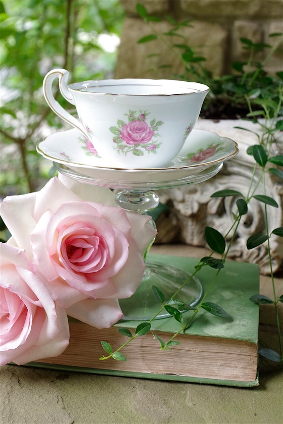 Image of English Tea Rose