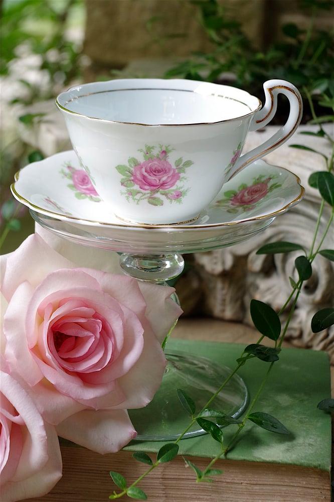 Image of English Tea Rose