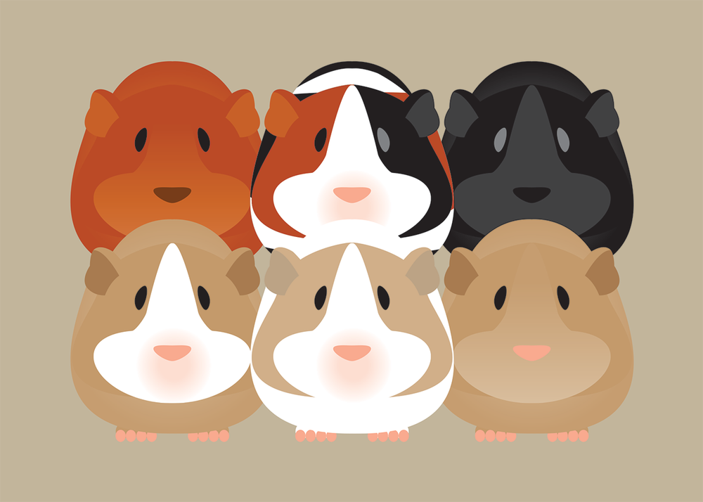 Image of Guinea Pig Collection