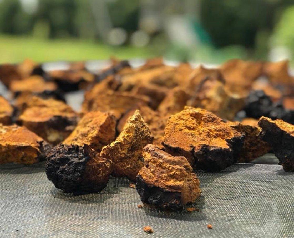Image of Chaga Mushroom