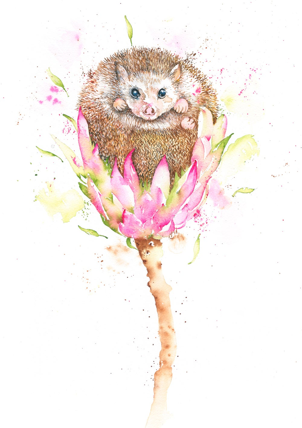 Image of Henry, the cute baby Hedgehog with FREE SHIPPING