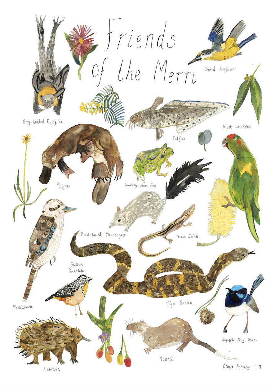 Image of Friends Of The Merri ~ Prints