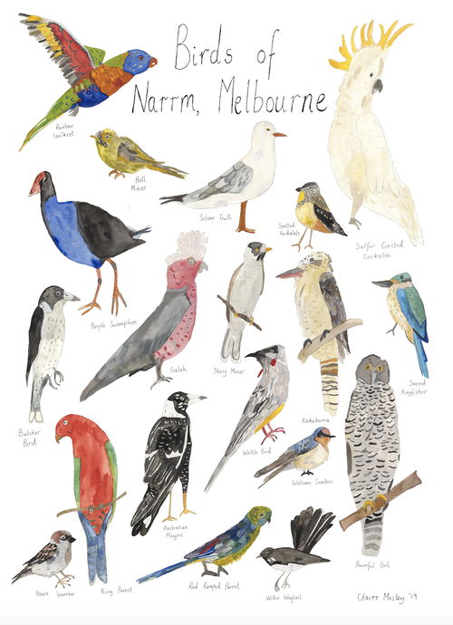 Image of Birds Of Narrm, Melbourne - A Tea Towel