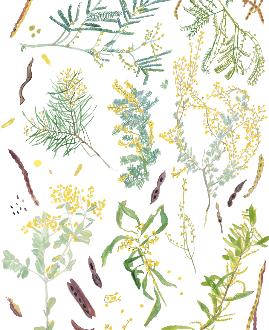 Image of I Love Wattle ~ Prints