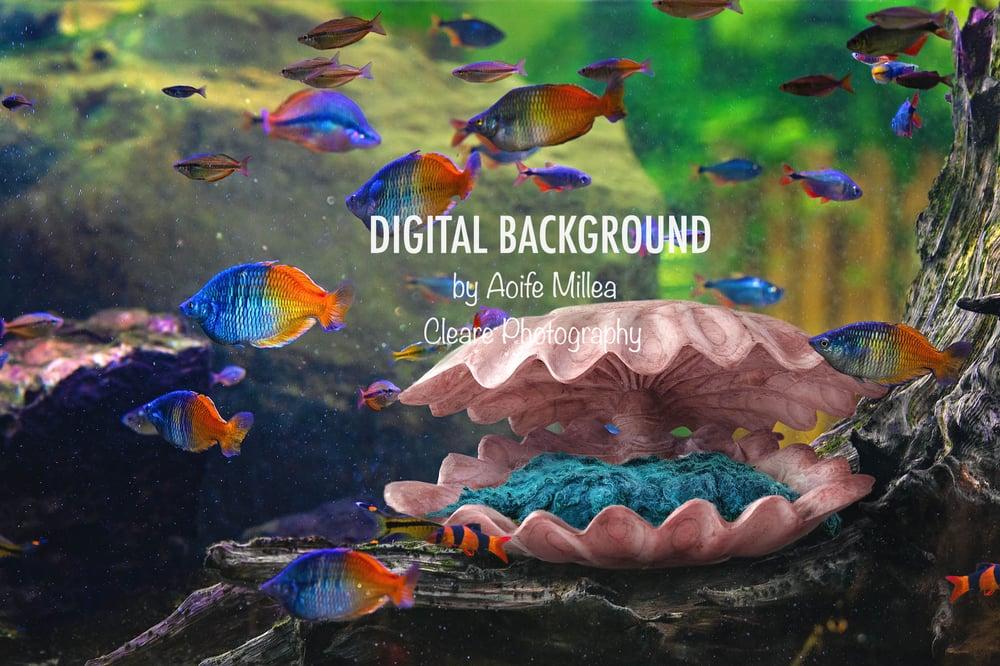 Image of sea shell newborn digital backdrop