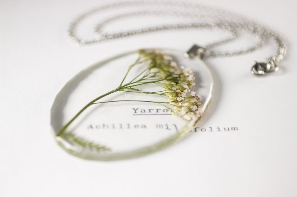 Image of Yarrow (Achillea millefolium) - Large Oval #1