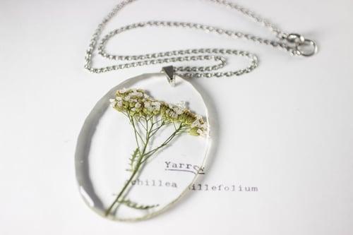 Image of Yarrow (Achillea millefolium) - Large Oval #2