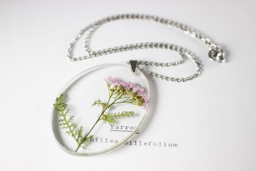Image of Pink Yarrow (Achillea millefolium) - Medium Oval #2