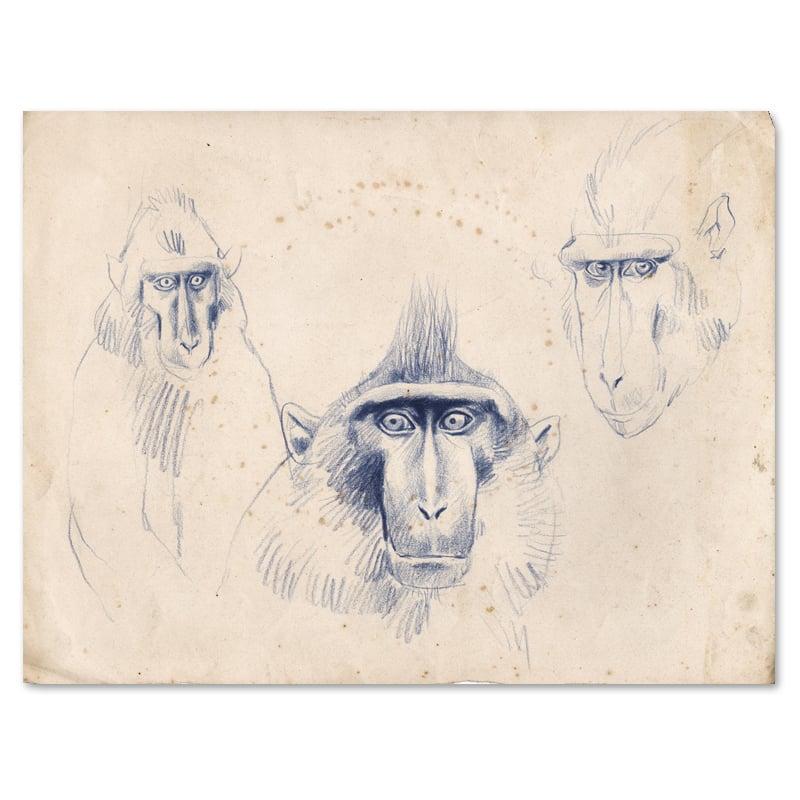 """Image of Original Painting - """"Macaques à crête 1"""" - 35x28 cm"""