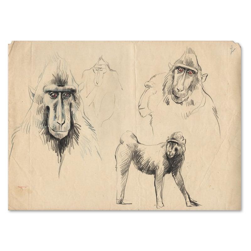 "Image of Original Drawing - ""Macaques à crête 2"" - 24x33,5 cm"