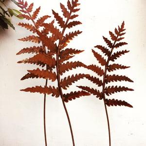 Image of Rusty garden fern