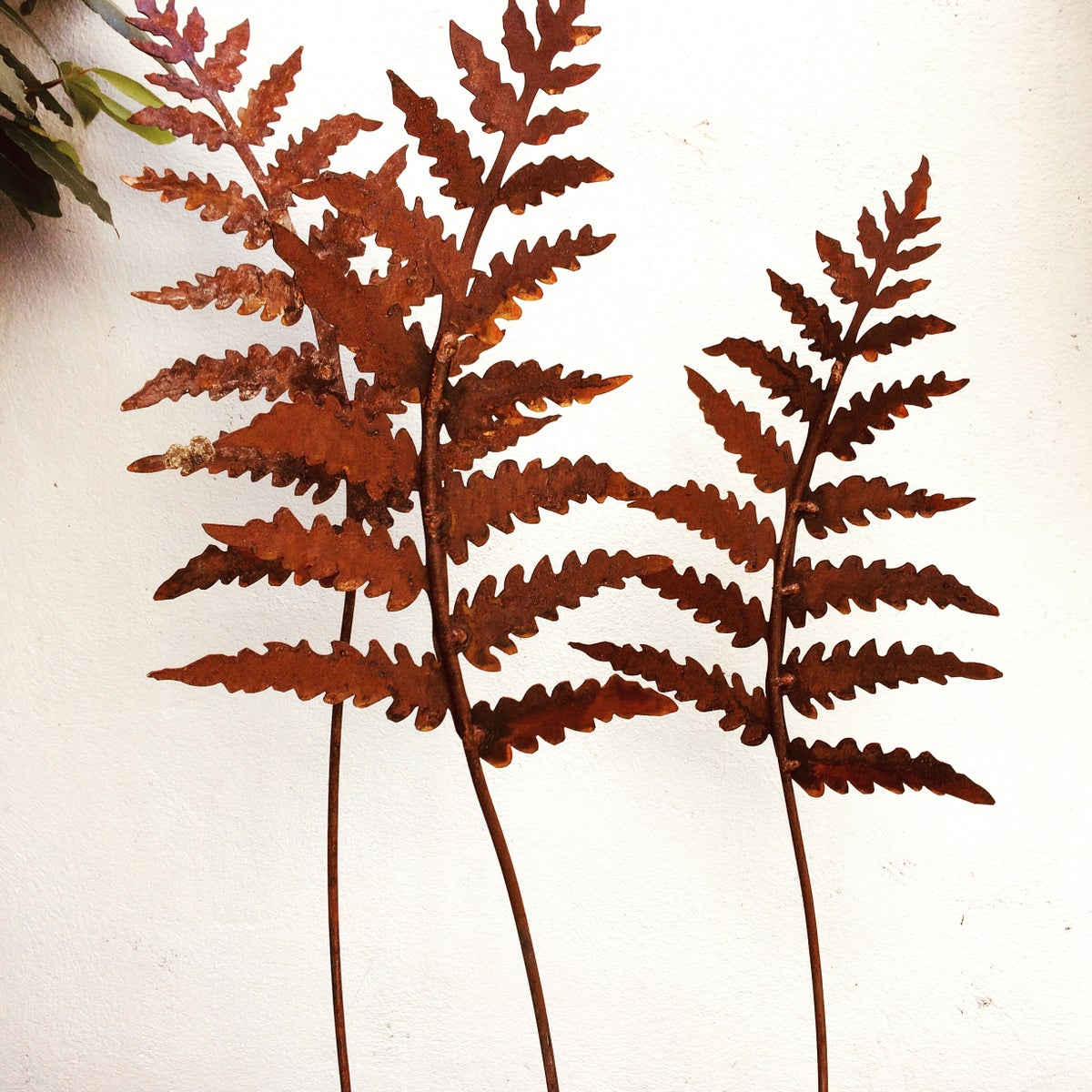 Rusty garden fern