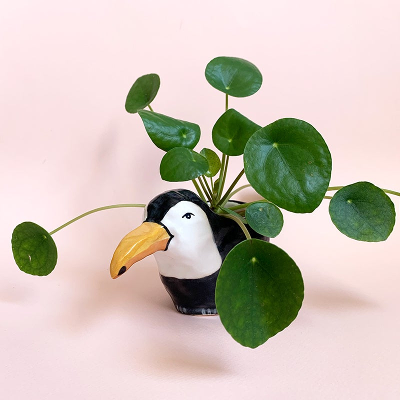 Image of Toucan Planter