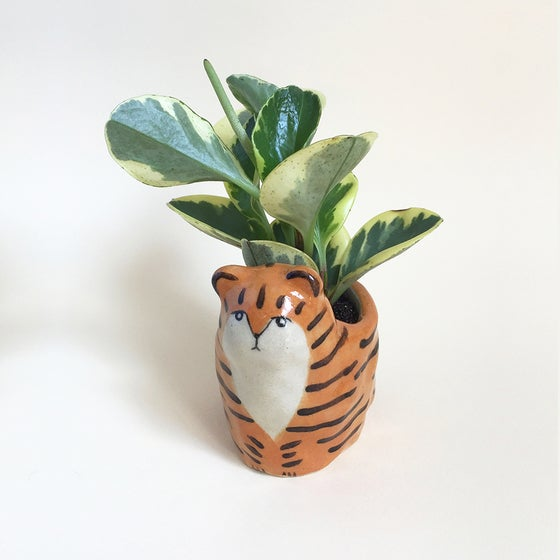 Image of Tiger Planter