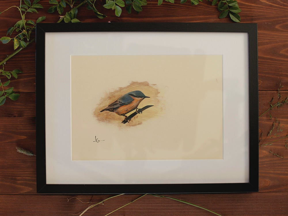 Image of Original Works on Paper Series - Nuthatch - A4/Framed