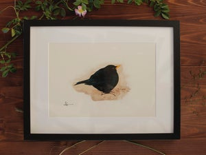 Image of Original Works on Paper Series - Blackbird - A4/Framed