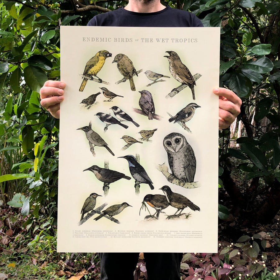 Image of Endemic Birds of The Wet Tropics