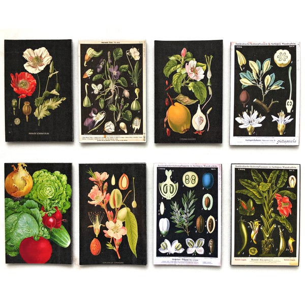 Image of Dark Botanical Sheet Magnet (Assorted Designs)