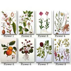 Image of Light Botanical Sheet Magnet (Assorted Designs)