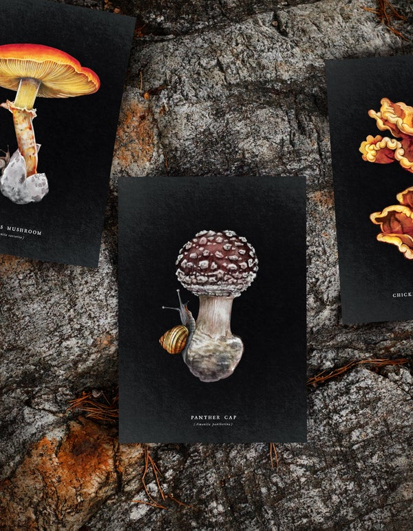 Image of Snail Funghi Triptych 1