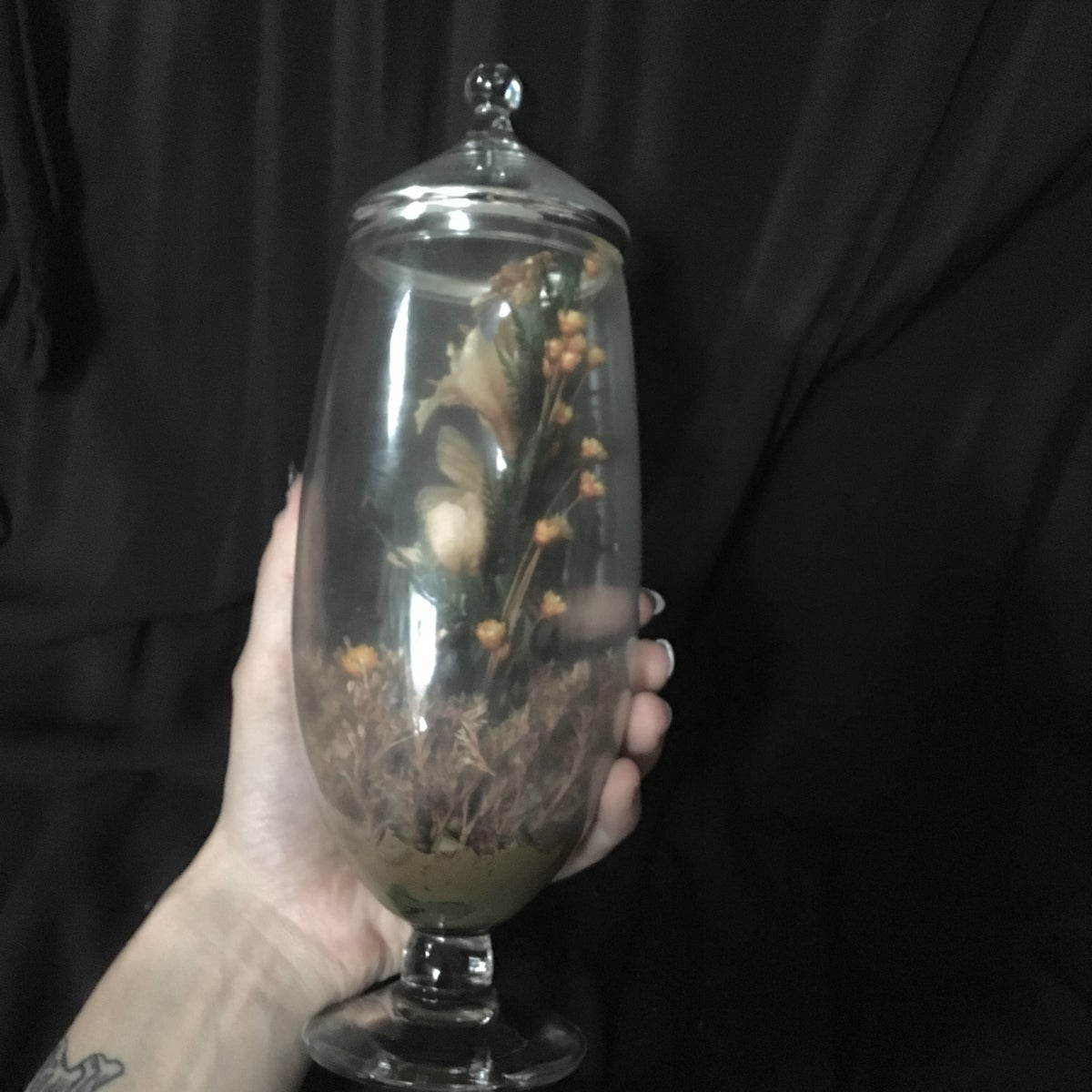 Image of Butterfly Terrarium