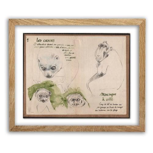 """Image of Original Drawing - """"Cuscus et macaque à crête"""" - 29x23,5 cm"""