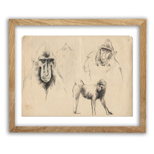 "Image of Original Drawing - ""Macaques à crête 2"" - 24x33,5 cm"