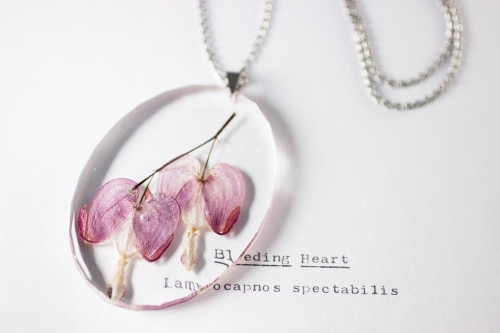 Image of Bleeding Heart (Lamprocapnos spectabilis) - Large Oval #1