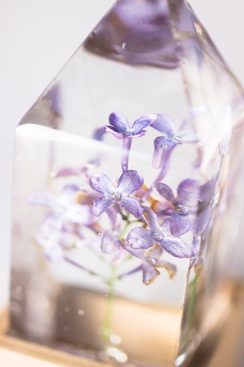 Image of Lilac (Syringa vulgaris) - Floral Nightlight #1