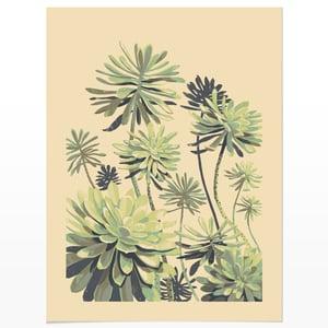 Image of Succulent Study 1