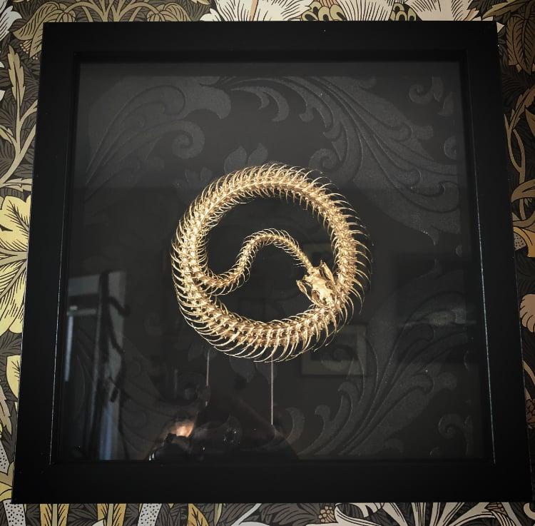 Image of Gilded Snake Articulation