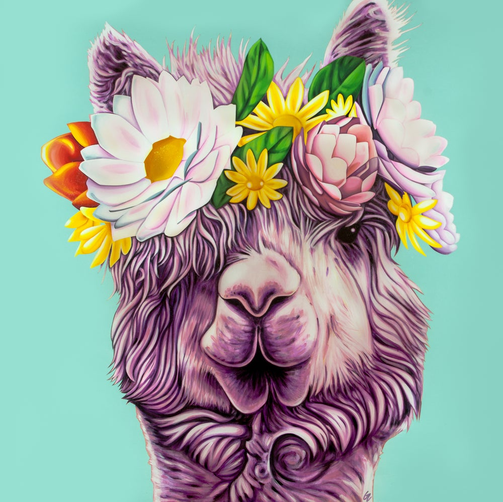 Image of Dolly (Llama)