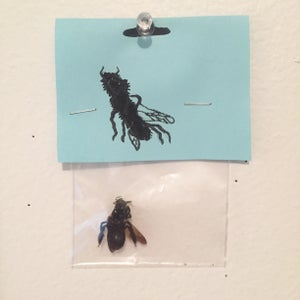 Image of Bee (NEW)