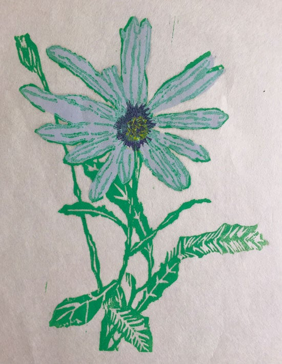 Image of African Daisy