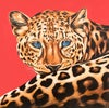 Leo (Leopard)