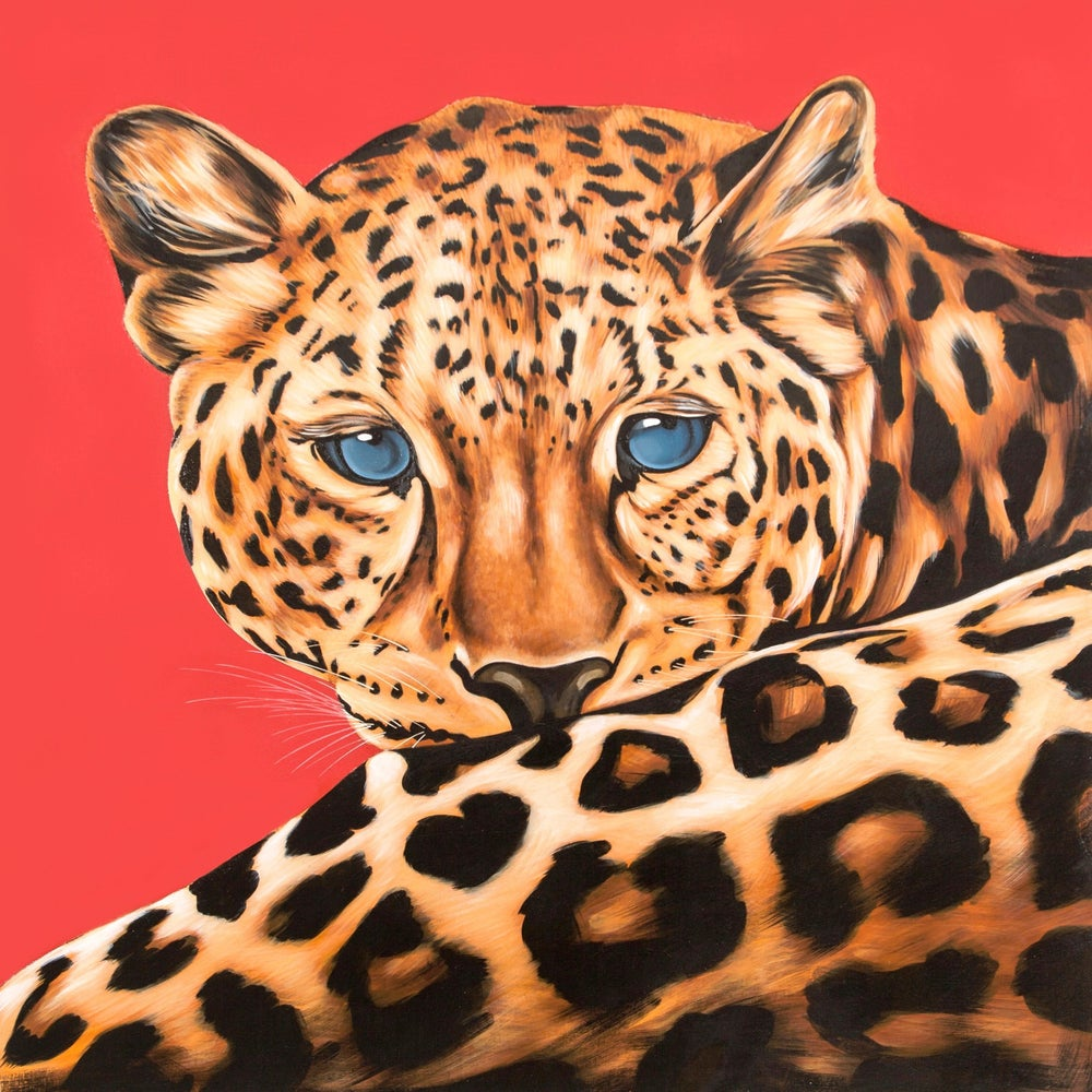 Image of Leo (Leopard)