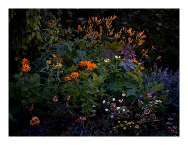 Image of Midnight in the Garden print - 8.5 x 11""