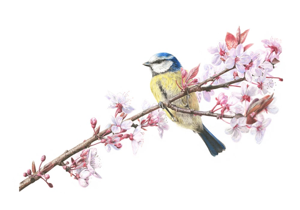 Image of 'Blossom & Blue' Limited Edition Print