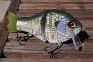Image of Billed Bubba Shellcracker