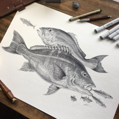Image of Red Snapper and Cigar Minnows