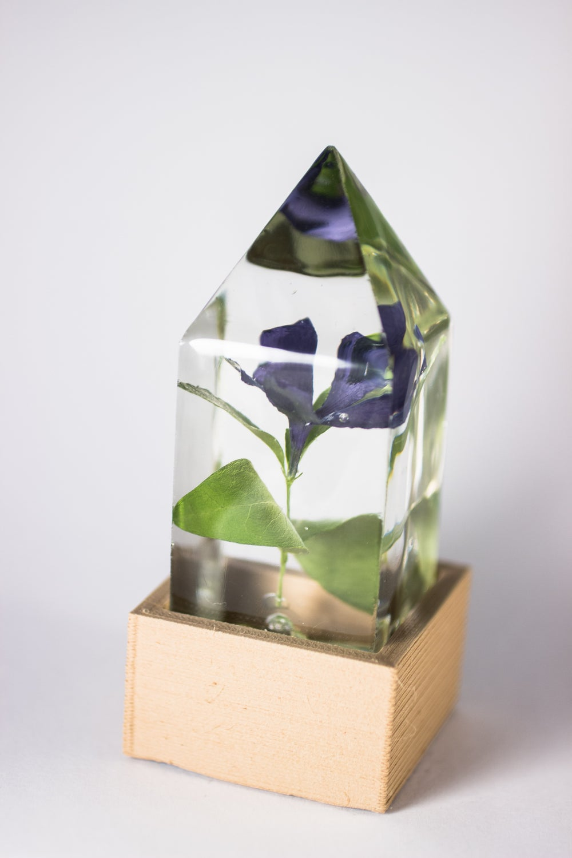 Image of Periwinkle (Vinca minor) - Floral Prism Light #1