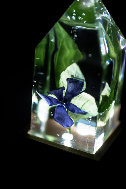 Image of Periwinkle (Vinca minor) - Floral Prism Light #2