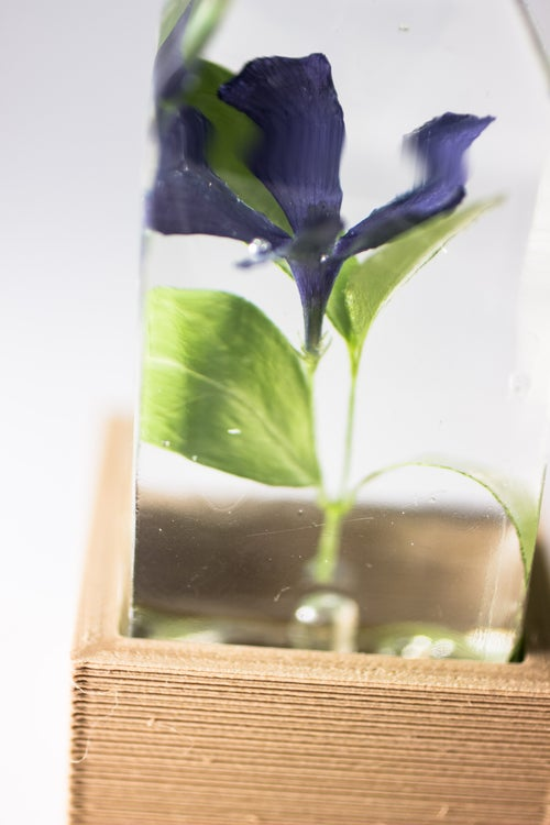 Image of Periwinkle (Vinca minor) - Floral Prism Light #3